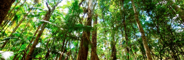 GettyImages-182237229_Rainforest.jpg